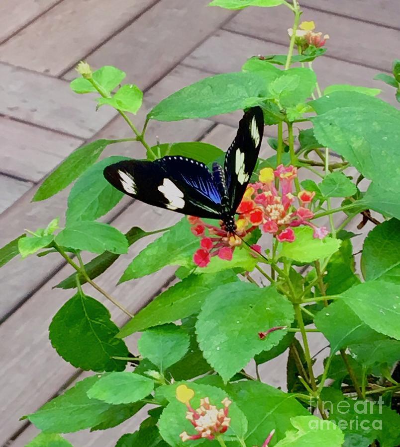 Nectar  by MKC