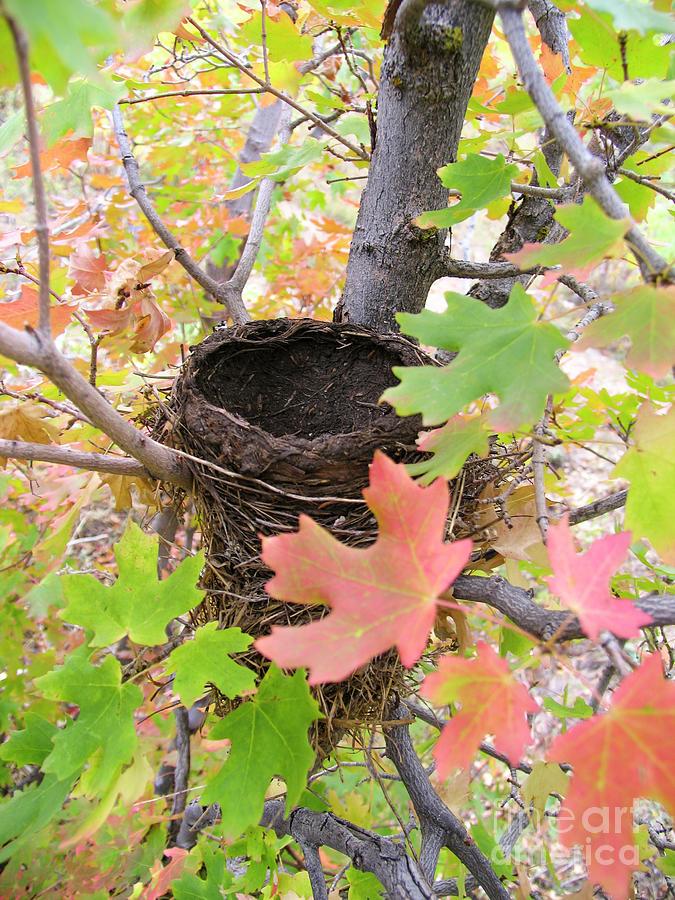 Nest by Spencer Baugh