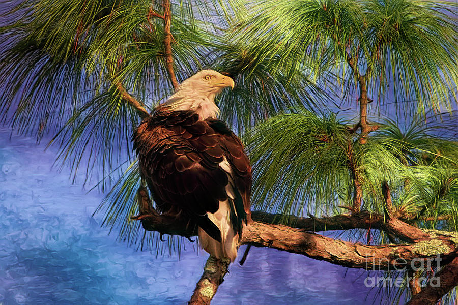 Nesting Florida Eagle by Deborah Benoit