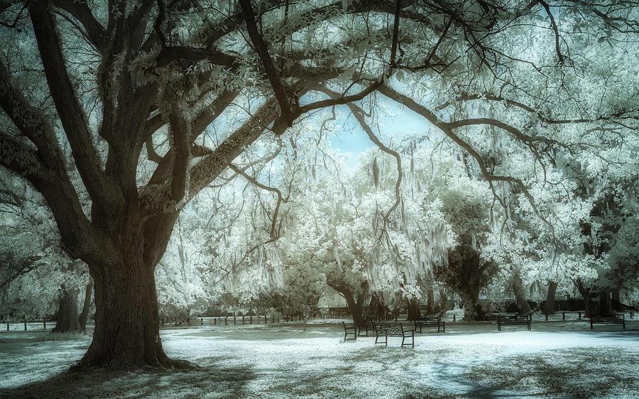 New Orleans Audubon Park Infrared Photograph