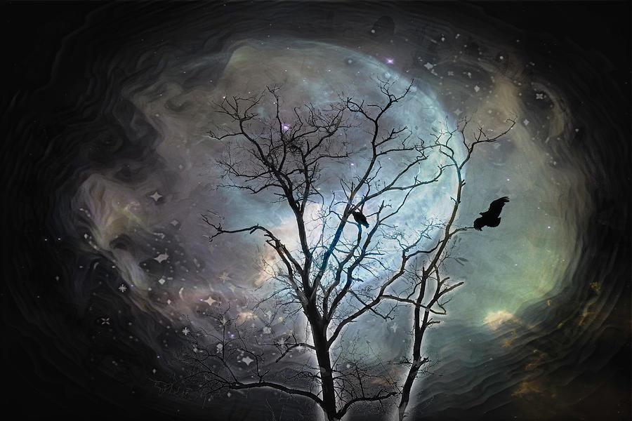 Night Flight Photograph
