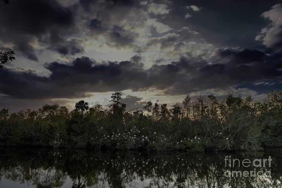 Nightly Heron Gathering Photograph