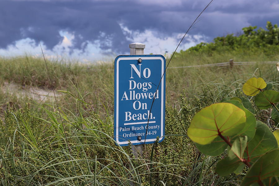 No Dogs On Beach by Blair Damson