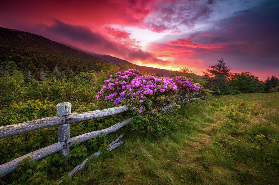 North Carolina Blue Ridge Mountains Appalachian Trail Spring Flowers Sunset Photograph