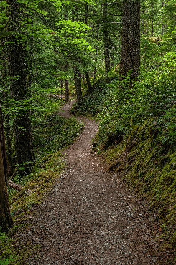 North Cascades Trail by Matthew Irvin