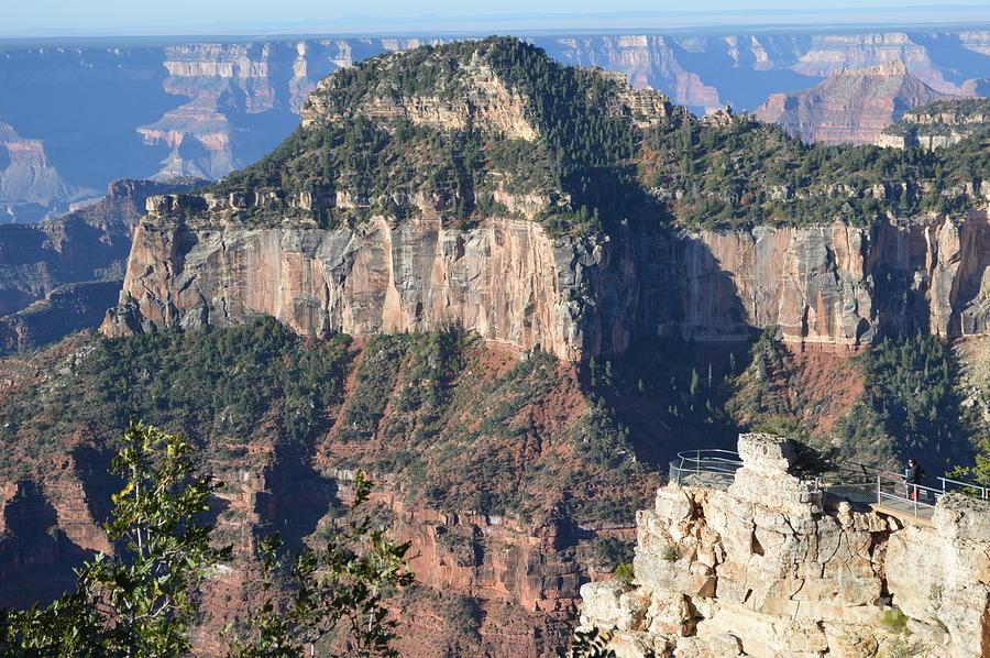 Grand Canyon Photograph - North Rim Morning by Barbara Von Pagel