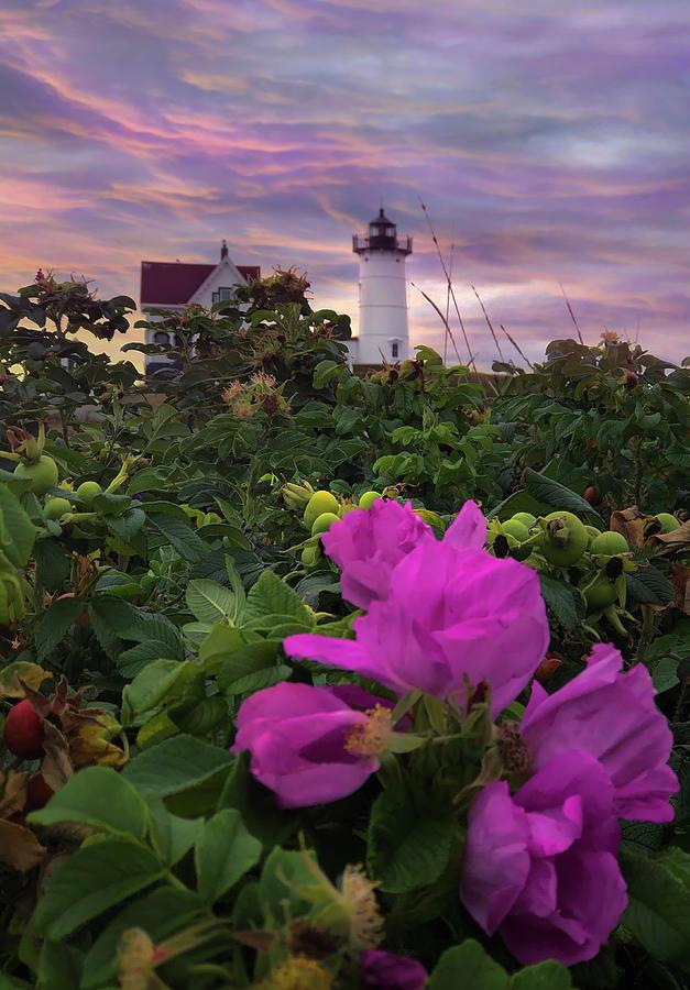 Nubble Lighthouse Pink Sunrise Photograph