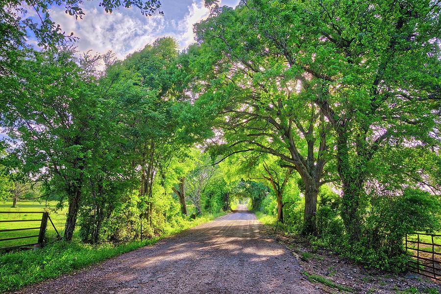 Oak Arches in Spring by Lynn Bauer
