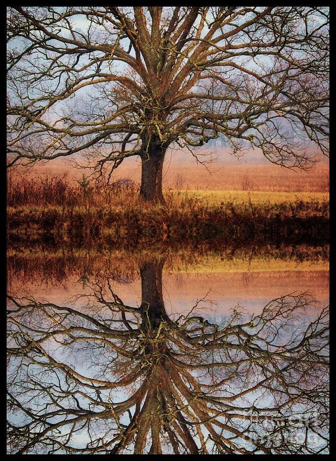 Oak Reflection Photograph