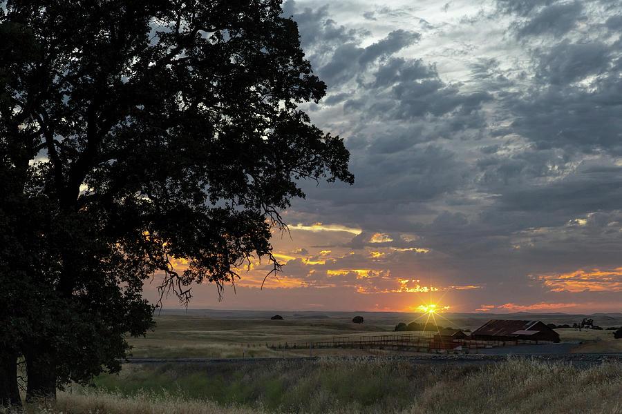 Oak Tree Sunset Photograph