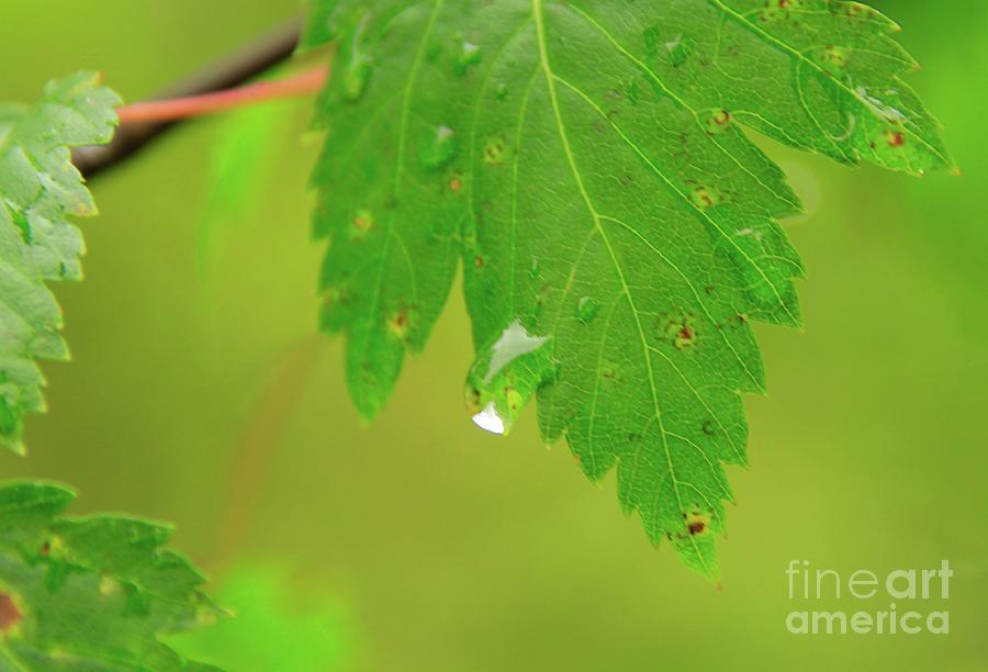 Leaf Photograph - Off The Edge by Roland Stanke
