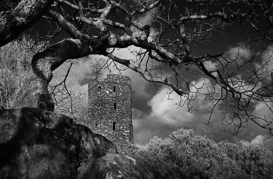 Old Arched Tree And Folly Photograph