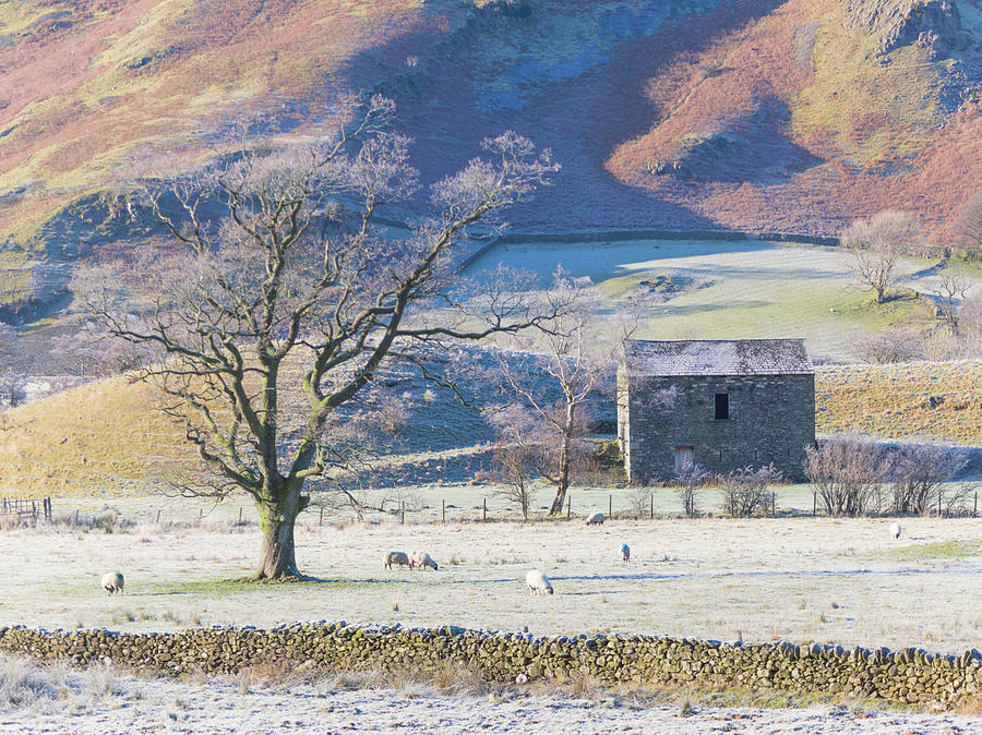 Old barn, winter time, Lake District by Anita Nicholson