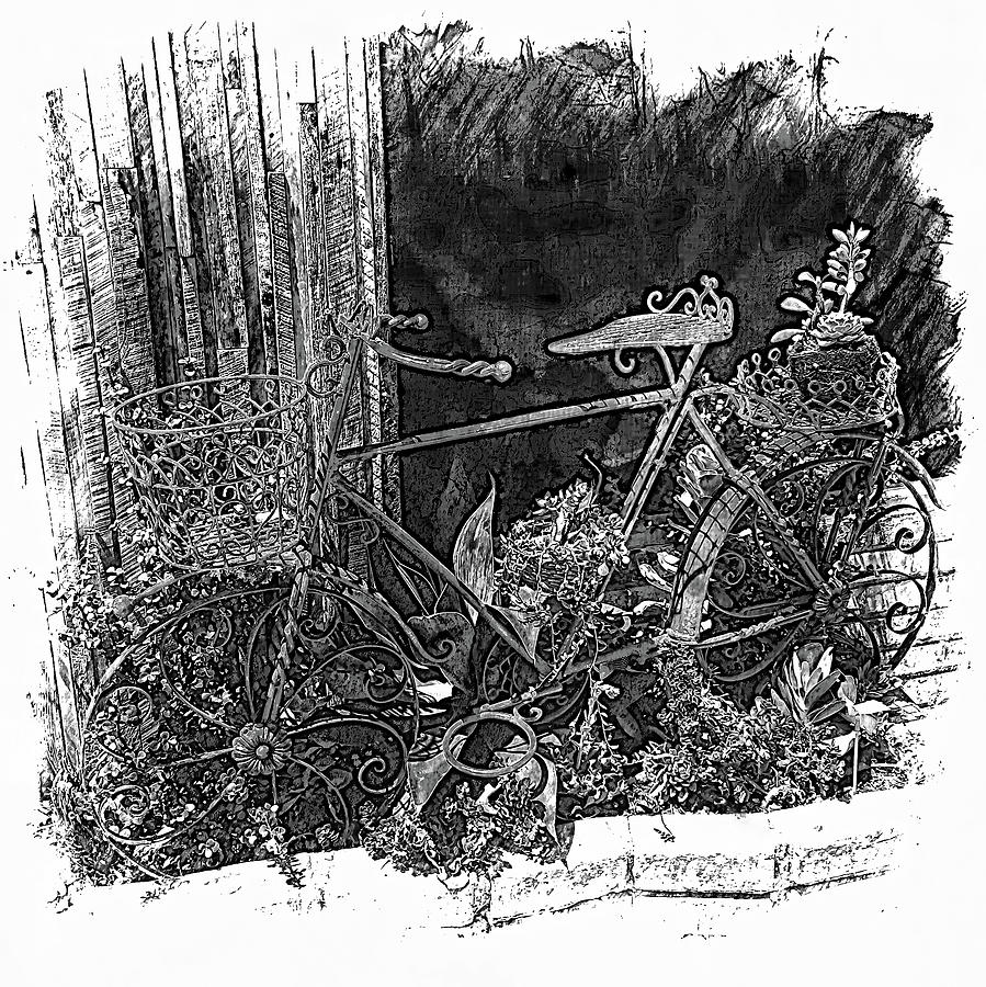 Old Bicylce Drawing Drawing