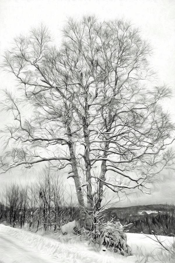 Old Birch Tree  by Betty Pauwels