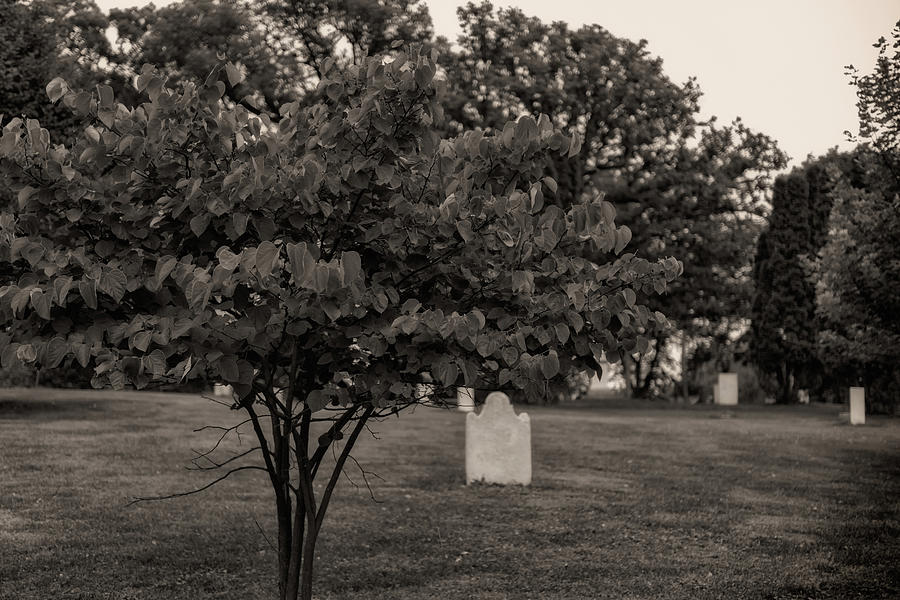 Old City Cemetery by Jim Shackett