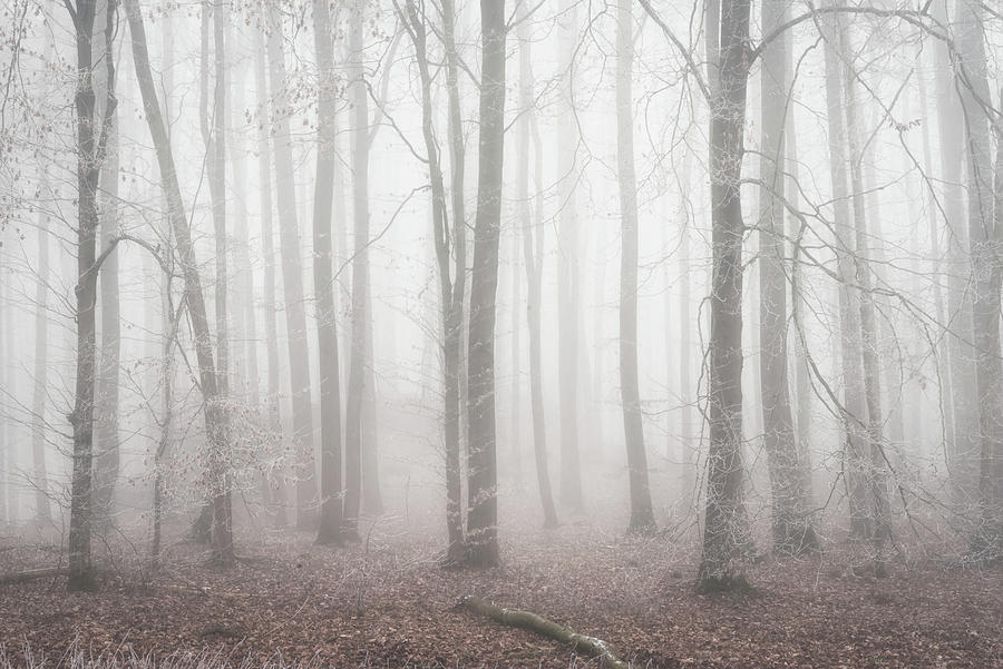 Old Forest Photograph
