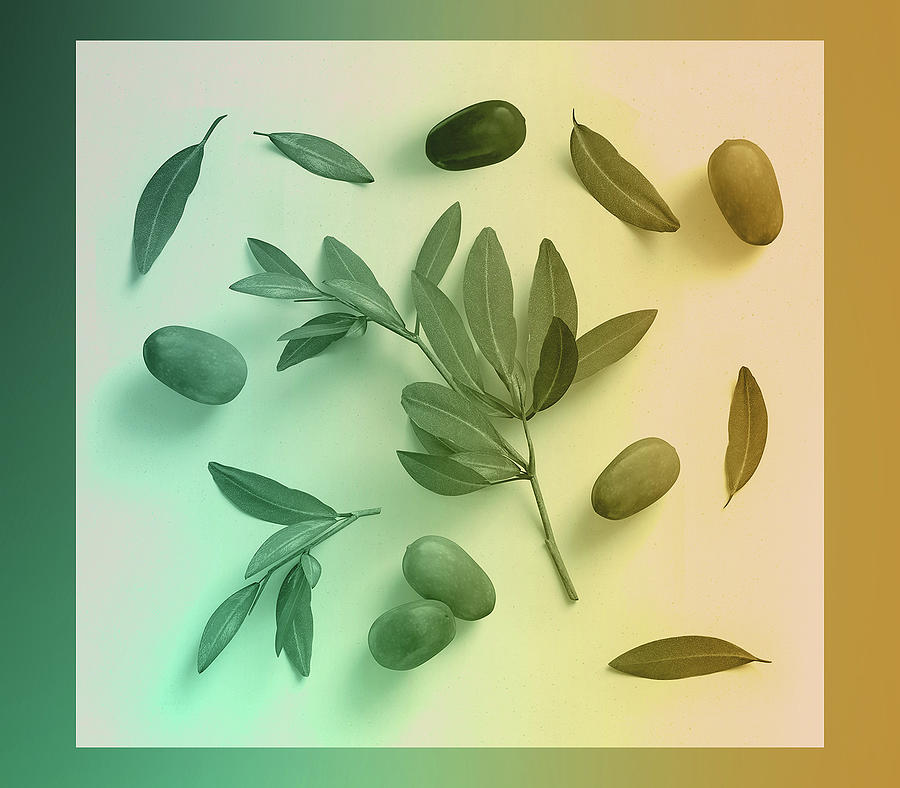 Olive Leaves And Olives by Johanna Hurmerinta
