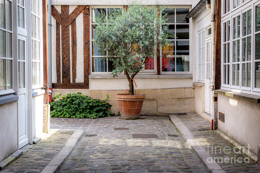 Olive Tree In Courtyard - Paris France Photograph