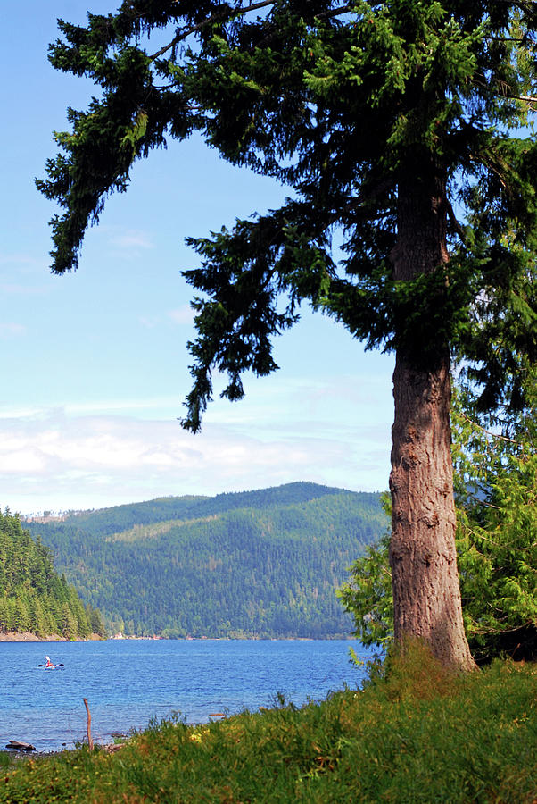 On The Lake. Olympic National Park Photograph