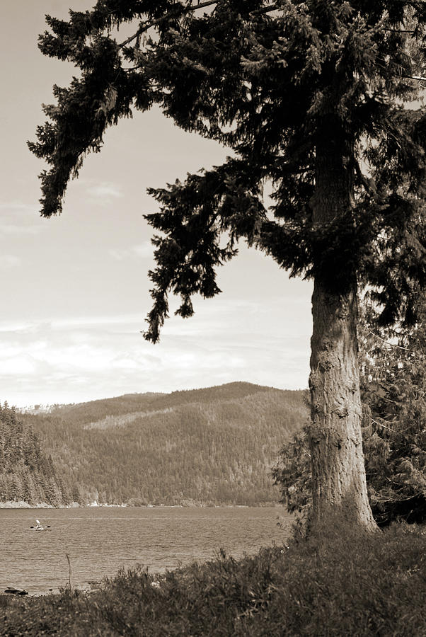 On The Lake Sepia. Olympic National Park Photograph