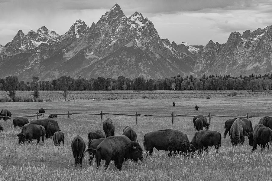 Grand Teton National Park Photograph - On The Range by Melissa Southern