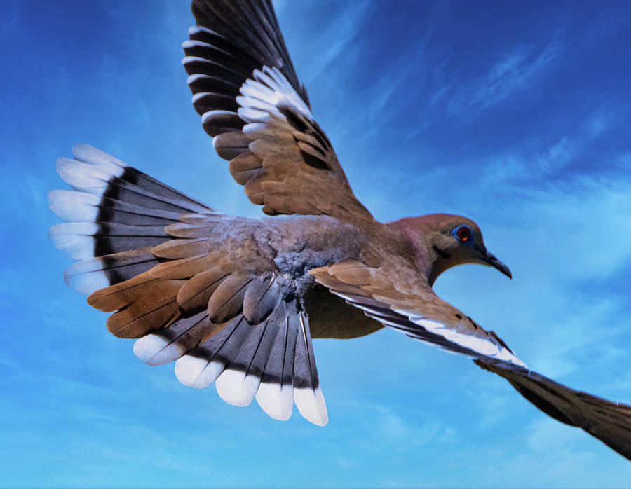On The Wings Of A Dove Photograph