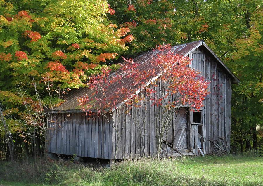 Once Upon a Farm #2 Photograph by Krithana Matthews