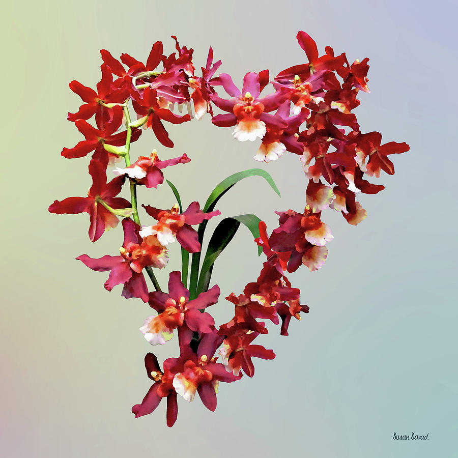 Orchid Photograph - Orchid - Oncostele Hilo Firecracker new Year by Susan Savad