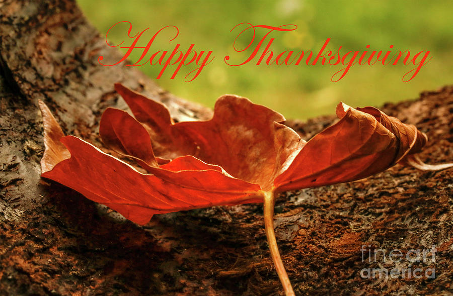 One Gorgeous Leaf Happy Thanksgiving Photograph
