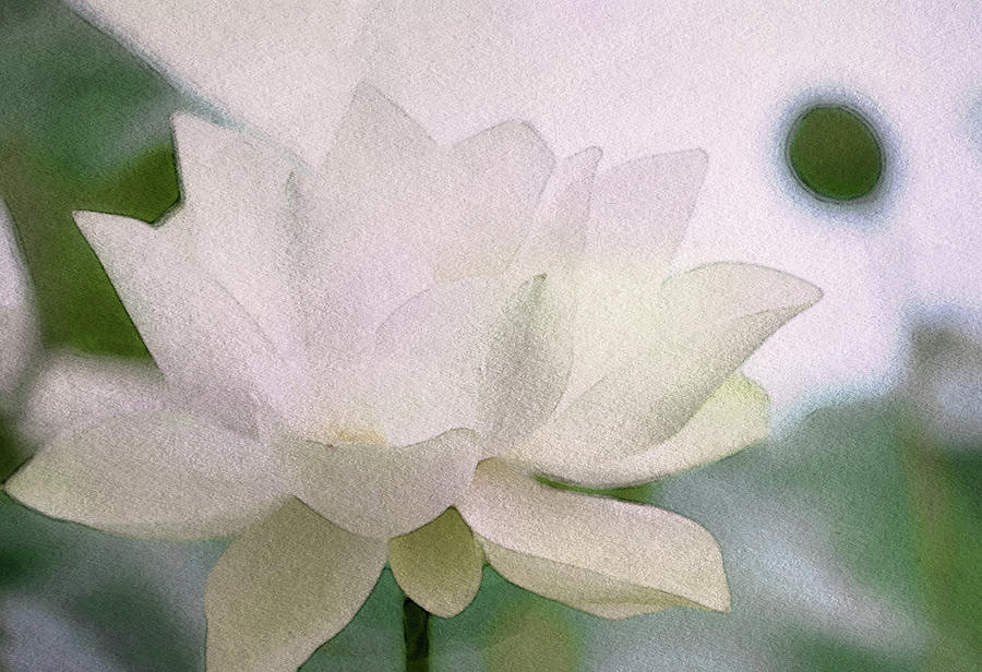 Opaline Lotus Digital Art