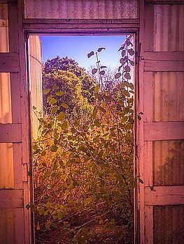 Open Door Photograph