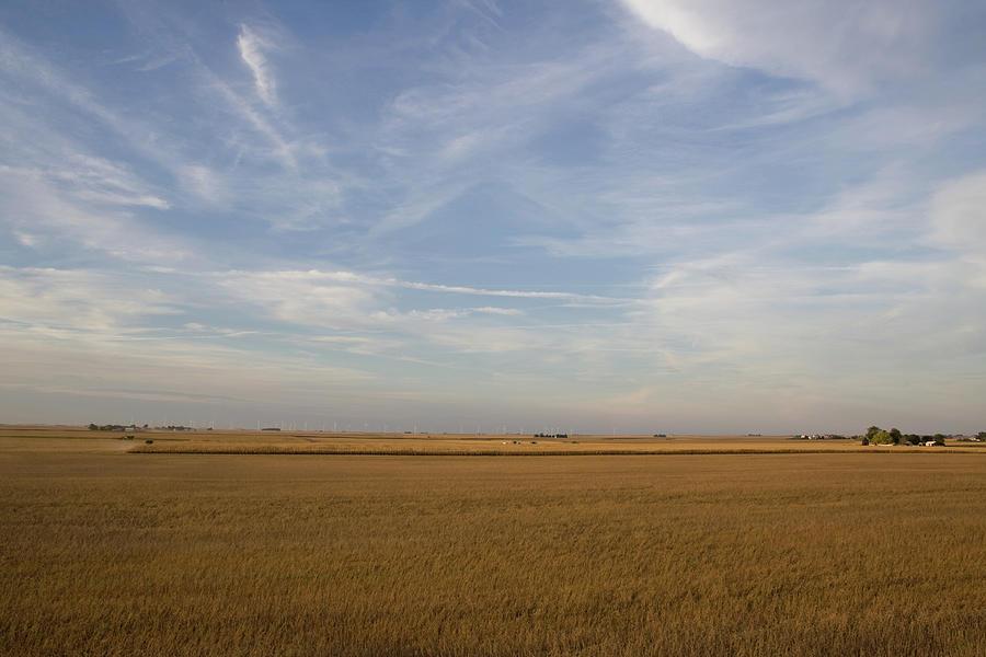 Open Harvest by Dylan Punke
