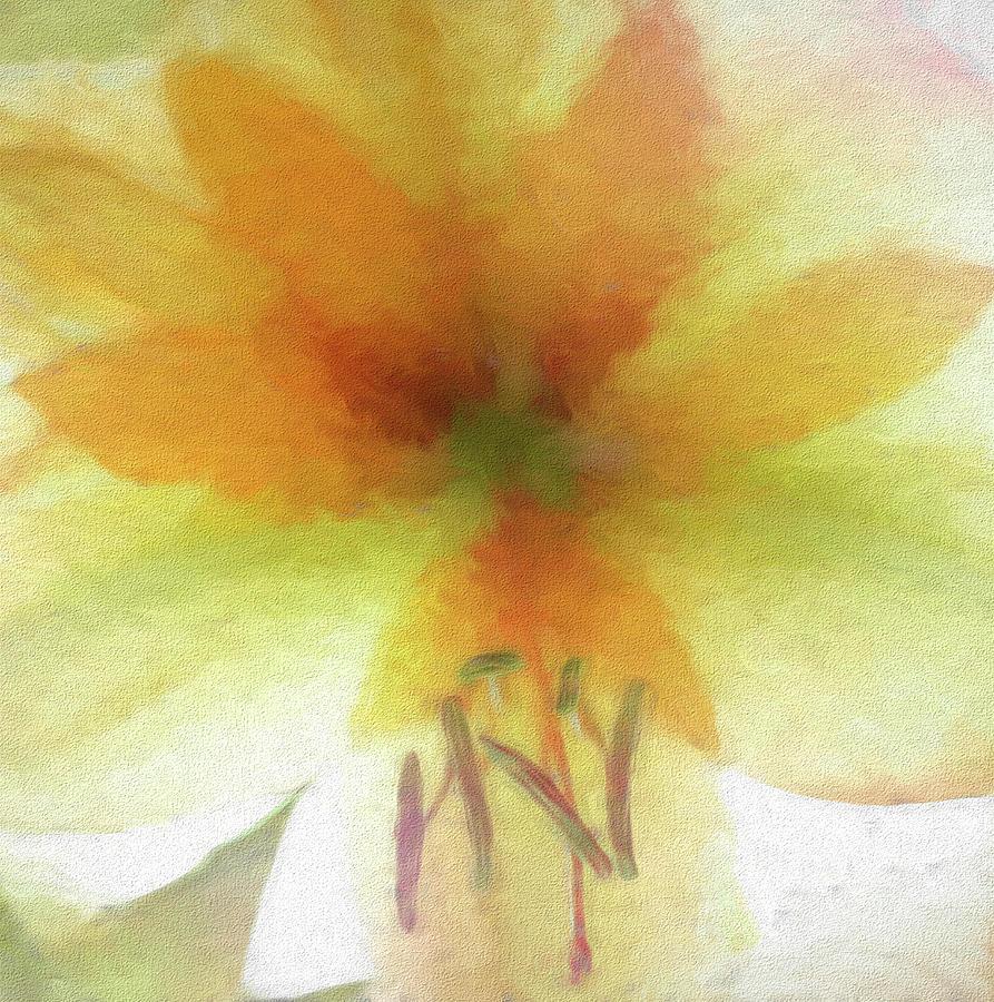 Orange Amaryllis Abstract Photograph