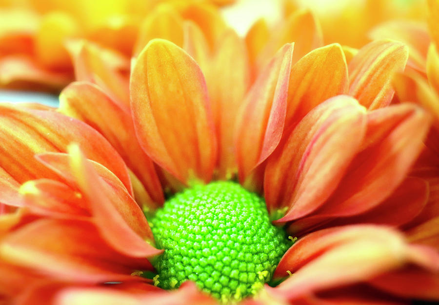 Orange And Green Is Beautiful Photograph