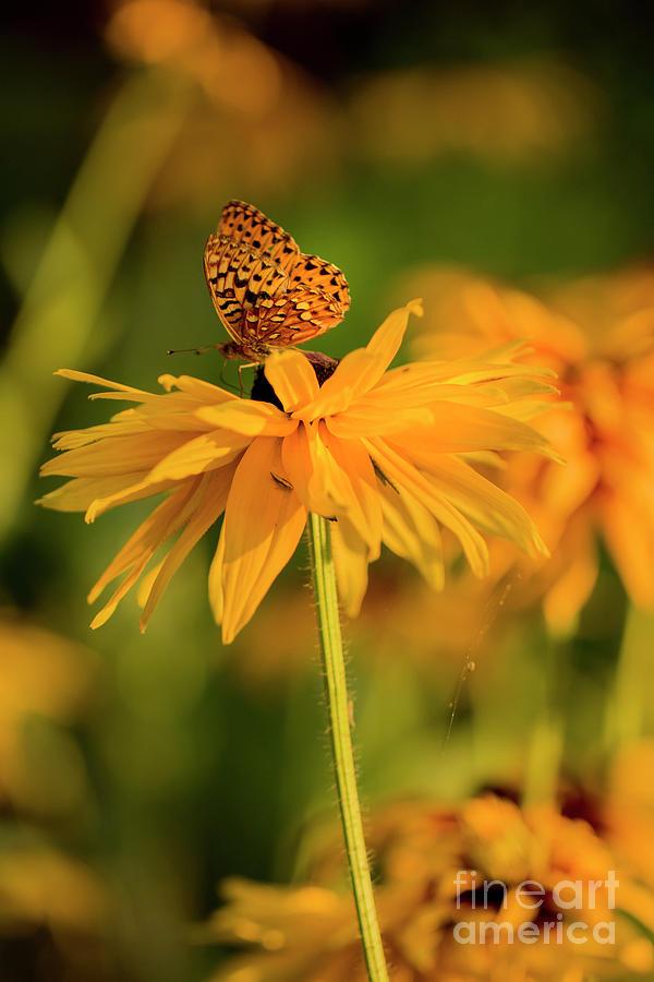 Orange Fluff Photograph