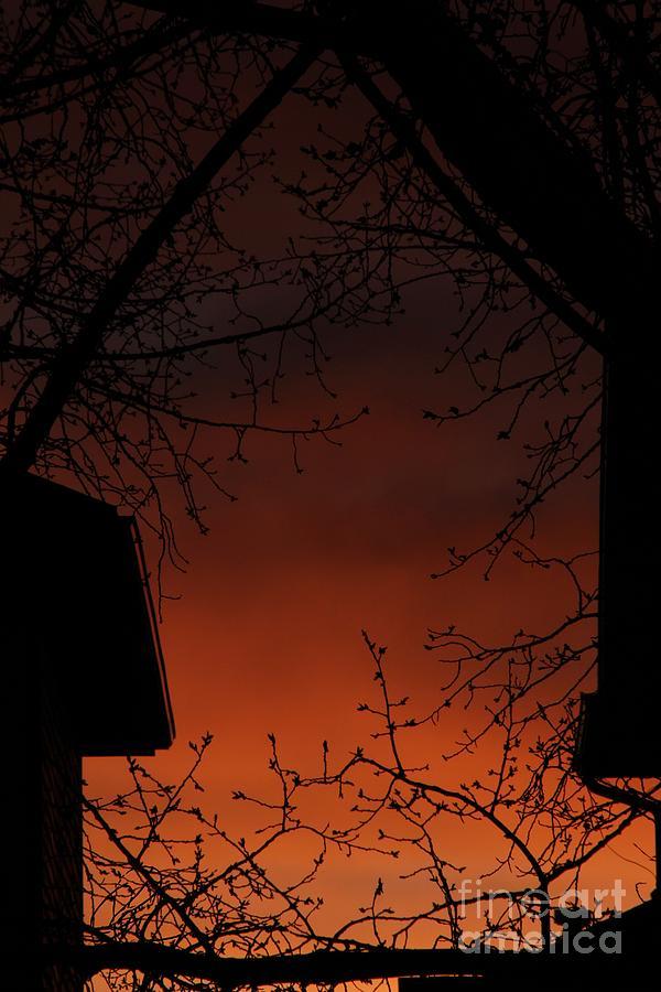 Orange Glow by Ann E Robson