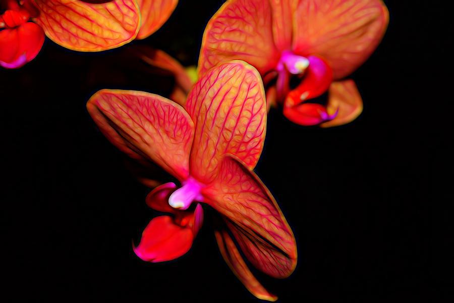 Orange Pink Orchid Photograph