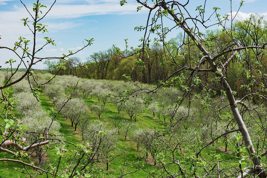 Orchard Framed Photograph