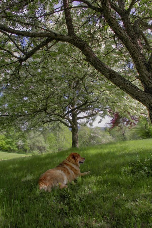 Orchard Shade Photograph
