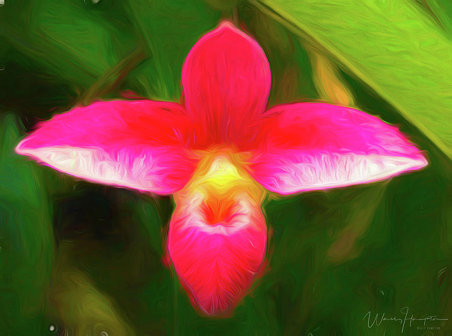 Orchid - 0012 Digital Art by Wally Hampton