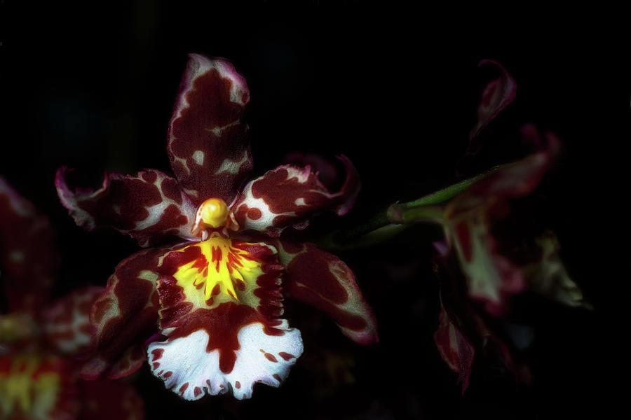 Orchid Branch by Cyndy Doty