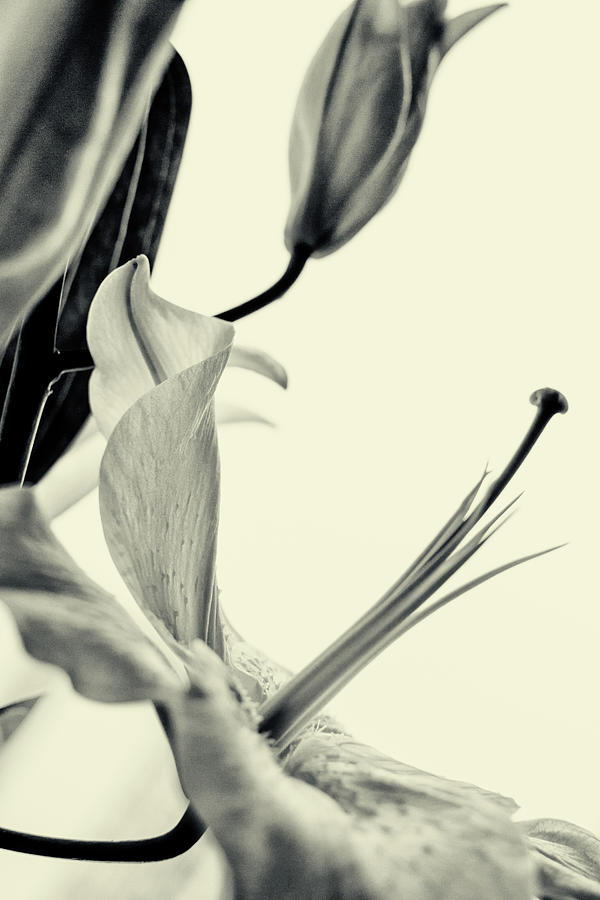 Orchid Flower Gestation by John Williams