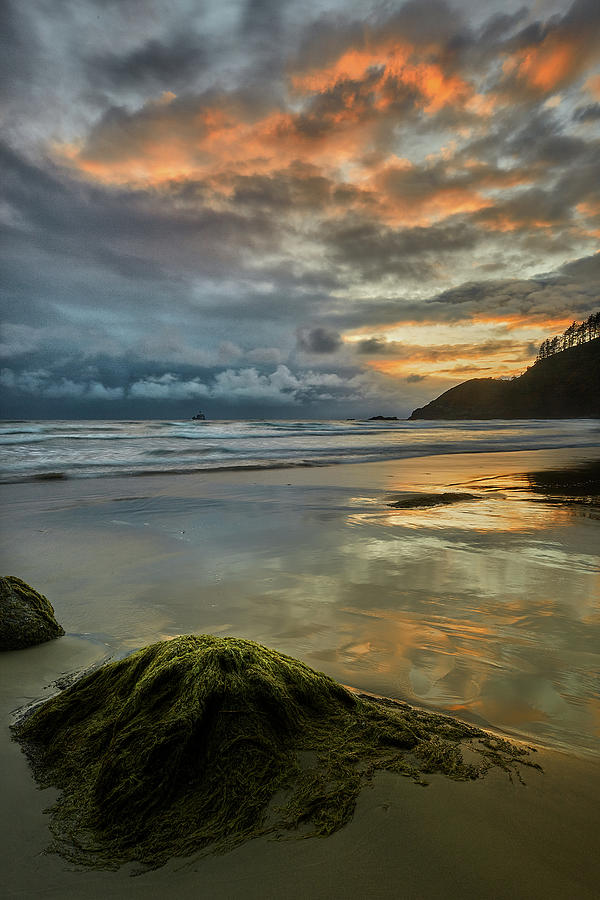 Oregon Coastline Photograph