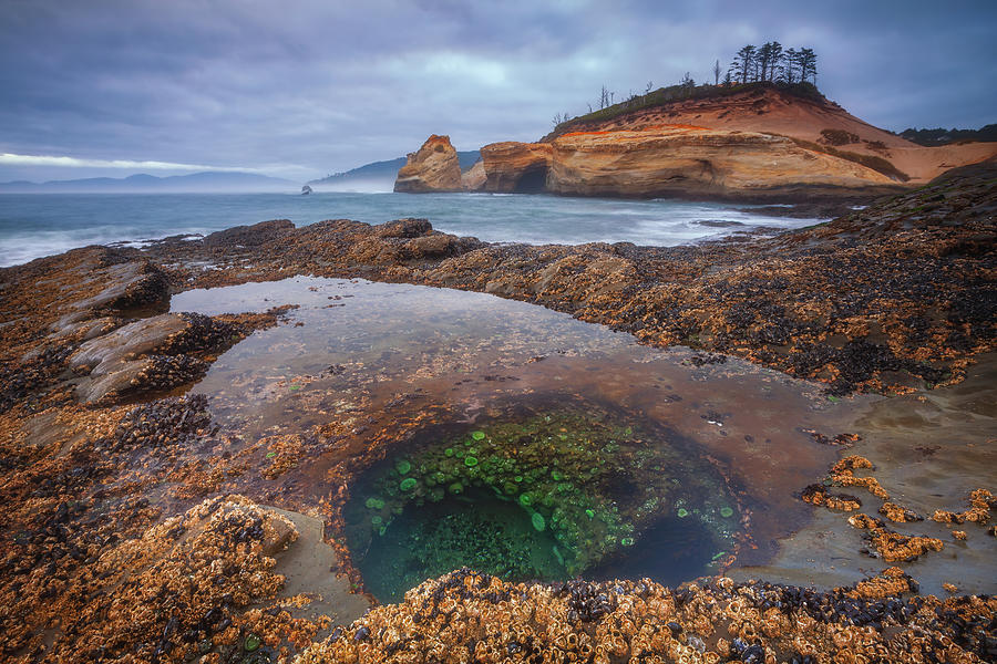 Oregon Tide Pool Photograph