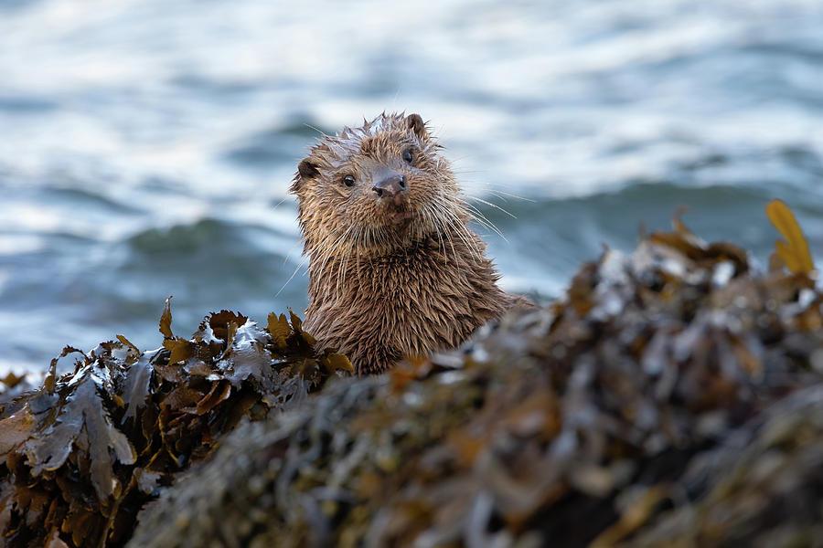 Otter Cub Peekaboo by Peter Walkden