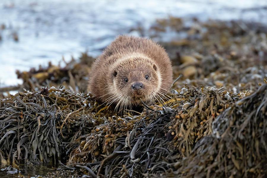 Otter Cub by Peter Walkden