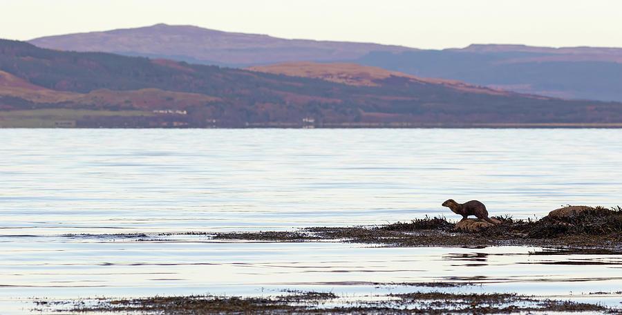 Otter View by Peter Walkden