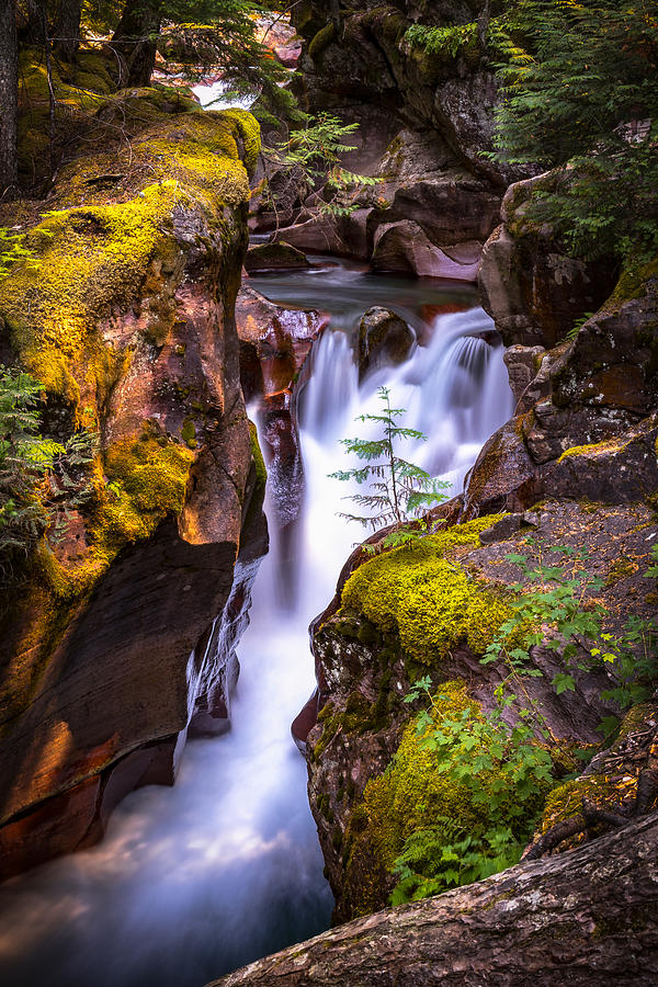 Glacier National Park Photograph - Out On A Ledge by Ryan Smith