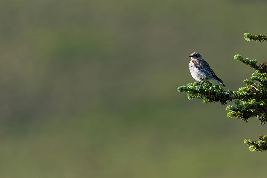 Birds Photograph - Out On a Limb by Darren White
